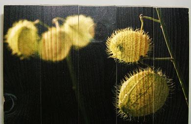 Blickstoff - Druck auf Holz Bild 1