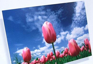 Blickstoff - Platten Forex Bild 1